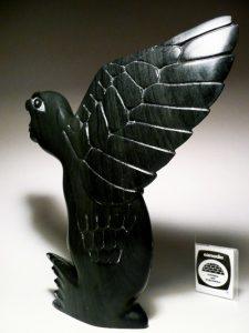 bird transformation