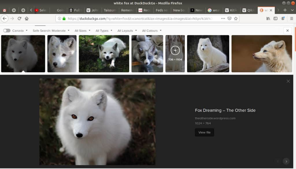 An image selected of an white fox.