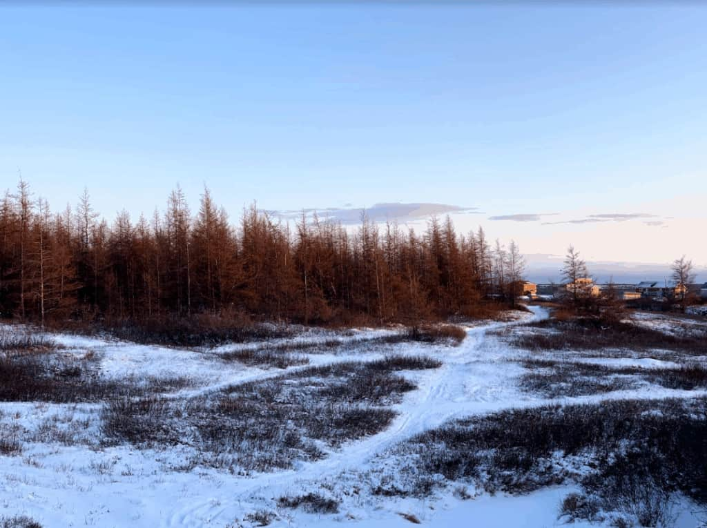 View of snowy wooded area with buildings in the distance, at dusk or dawn.