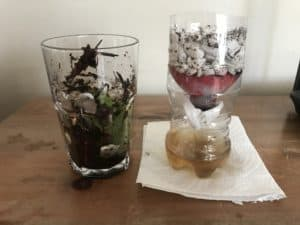 Create a Water Filter from Recycled and Natural Materials