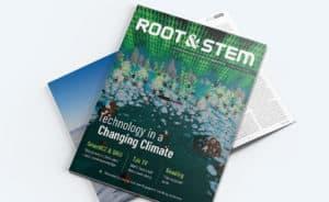 Root & STEM