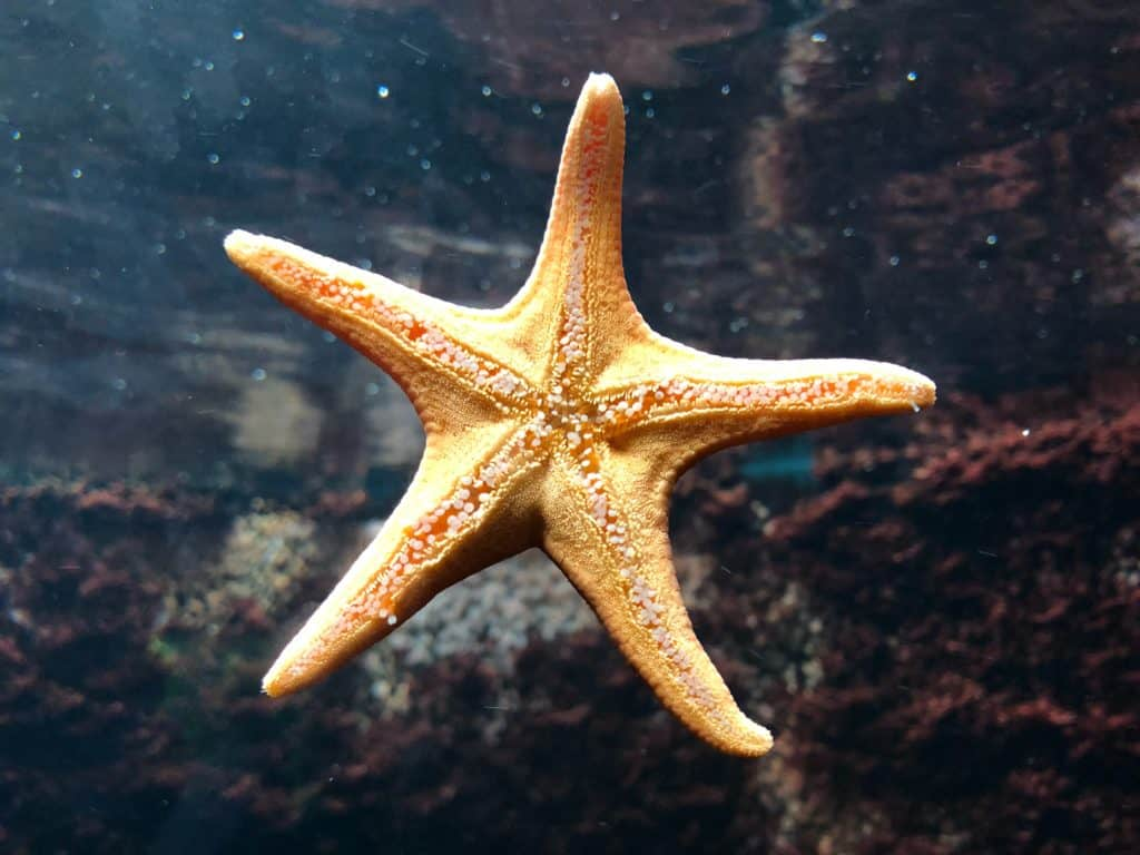 A star fish stuck to the glass.