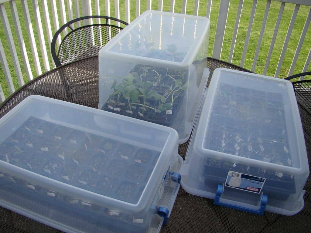 Greenhouses created out of bins.
