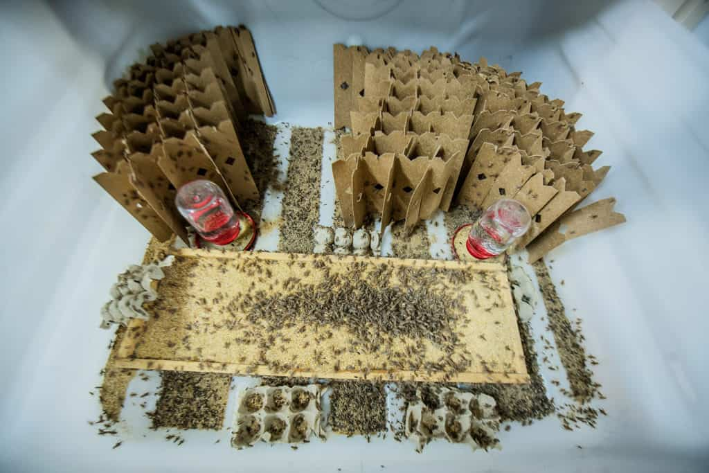 Insects surrounded by cardboard.