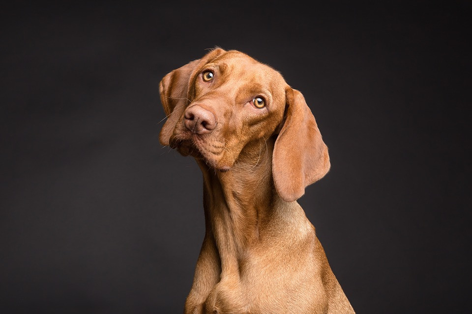 A photo of a dog.