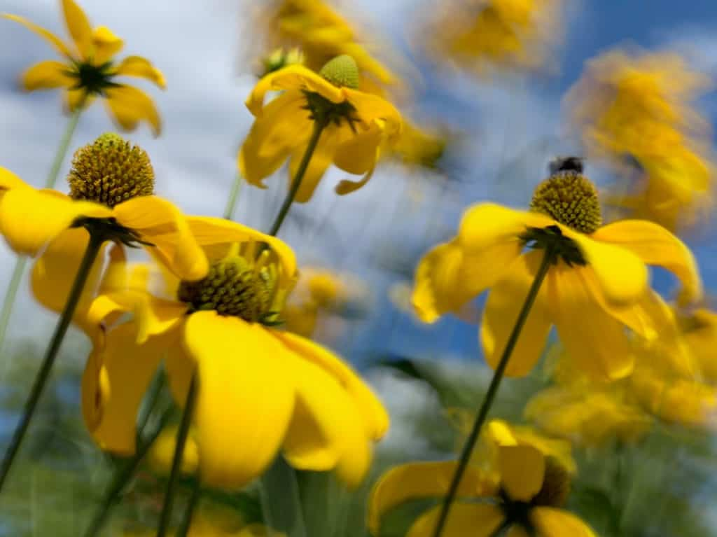 Yellow flowers at the forefront of the image with a blue sky blurred in the background.