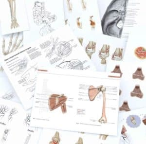 Medical Illustration: Drawing Art and Science Together
