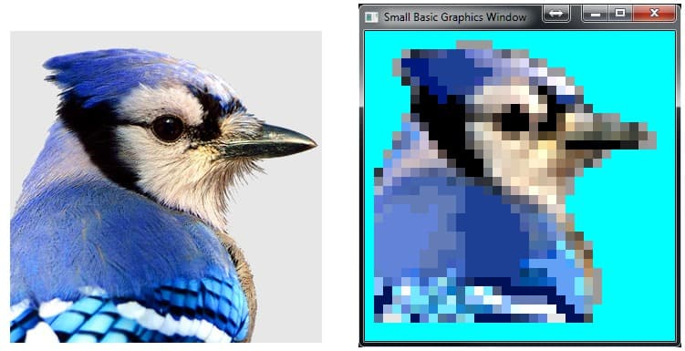 A photo of a blue jay beside a pixel art image of a blue jay created in Small Basic.