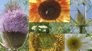 A collage of different flowers displaying a spiral pattern.
